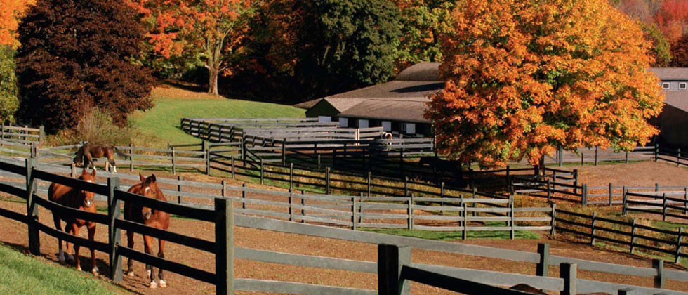 CT Horse Boarding and Stables