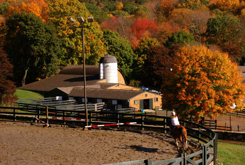 Horse Boarding And Horse Training Services At Willow Creek